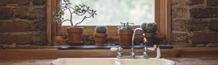 Houseplants lined up on a window ledge above a sink